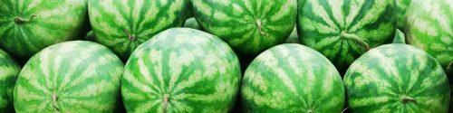 Watermelon Allergy Test