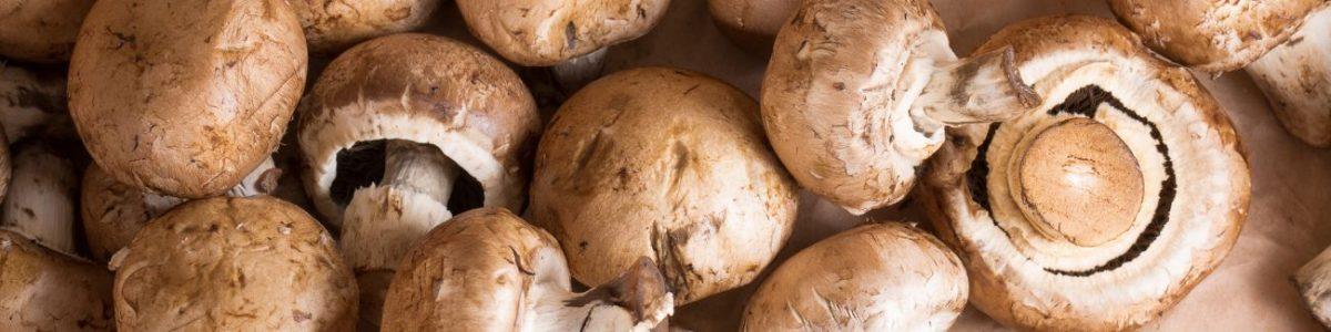 Mushroom Allergy Test