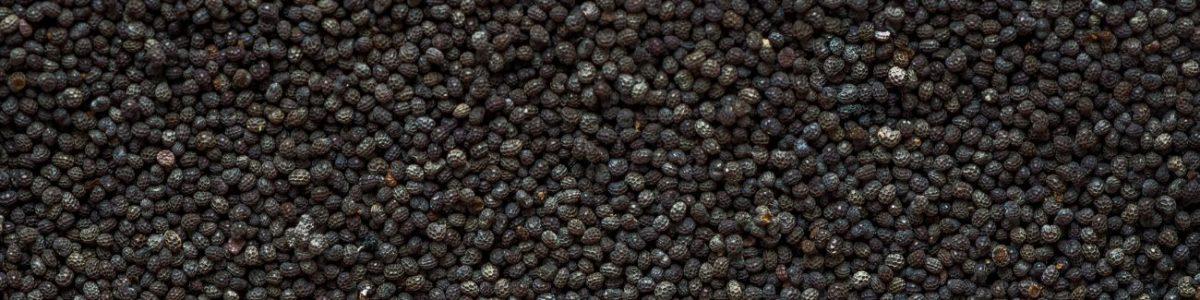 Poppy Seed Allergy Test