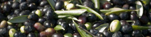 Olive Allergy Test