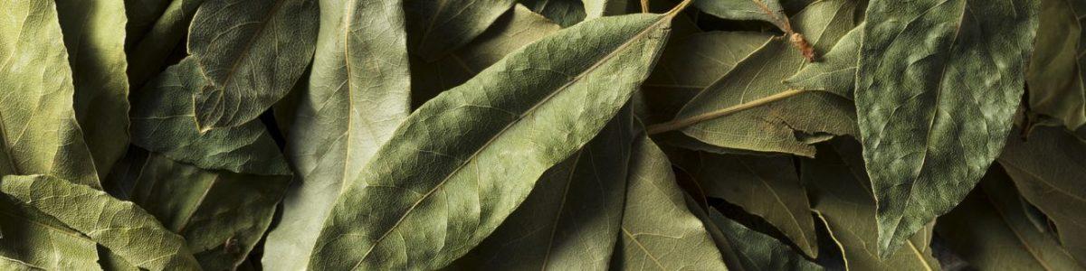 Bay Leaf Allergy Test