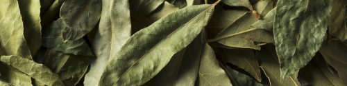 Bay Leaf Allergy Test