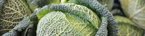 Cabbage Allergy Test