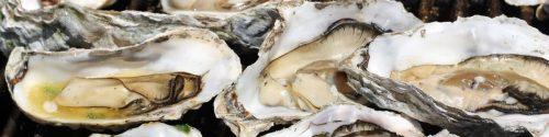 Oyster Allergy Test