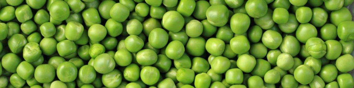 Pea Allergy Test