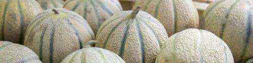 Melon Allergy Test