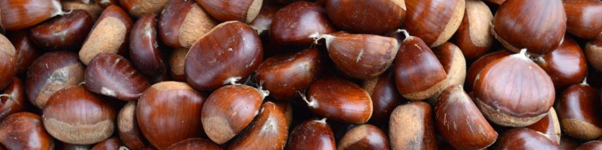Sweet Chestnut Allergy Test