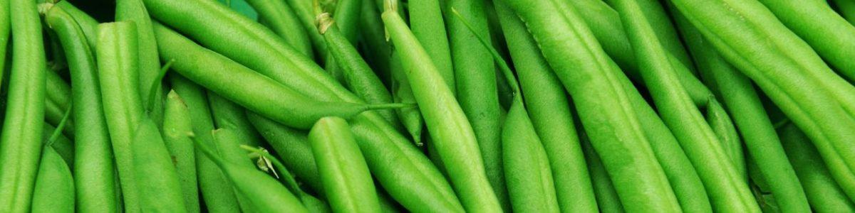 Green Bean Allergy Test