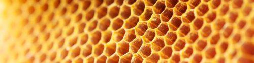 Honey Allergy Test